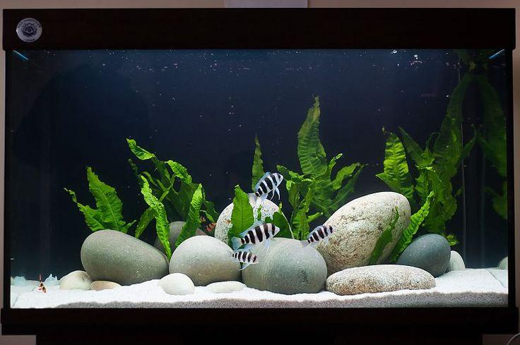 Пресноводный аквариум с живыми растениями