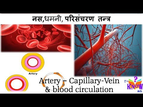 Biology - नस,धमनी, परिसंचरण तन्त्र (Vein, Artery & Circulatory system )