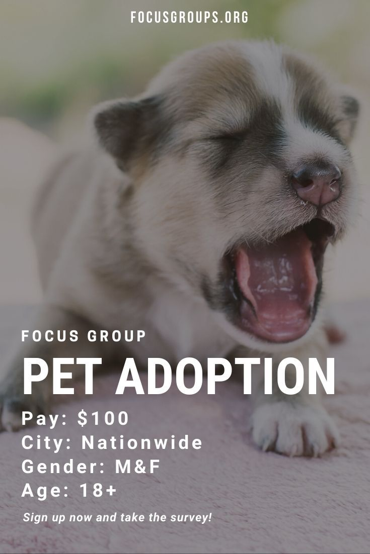 Focus Group On Pet Adoption Pet Adoption Focus Group Adoption