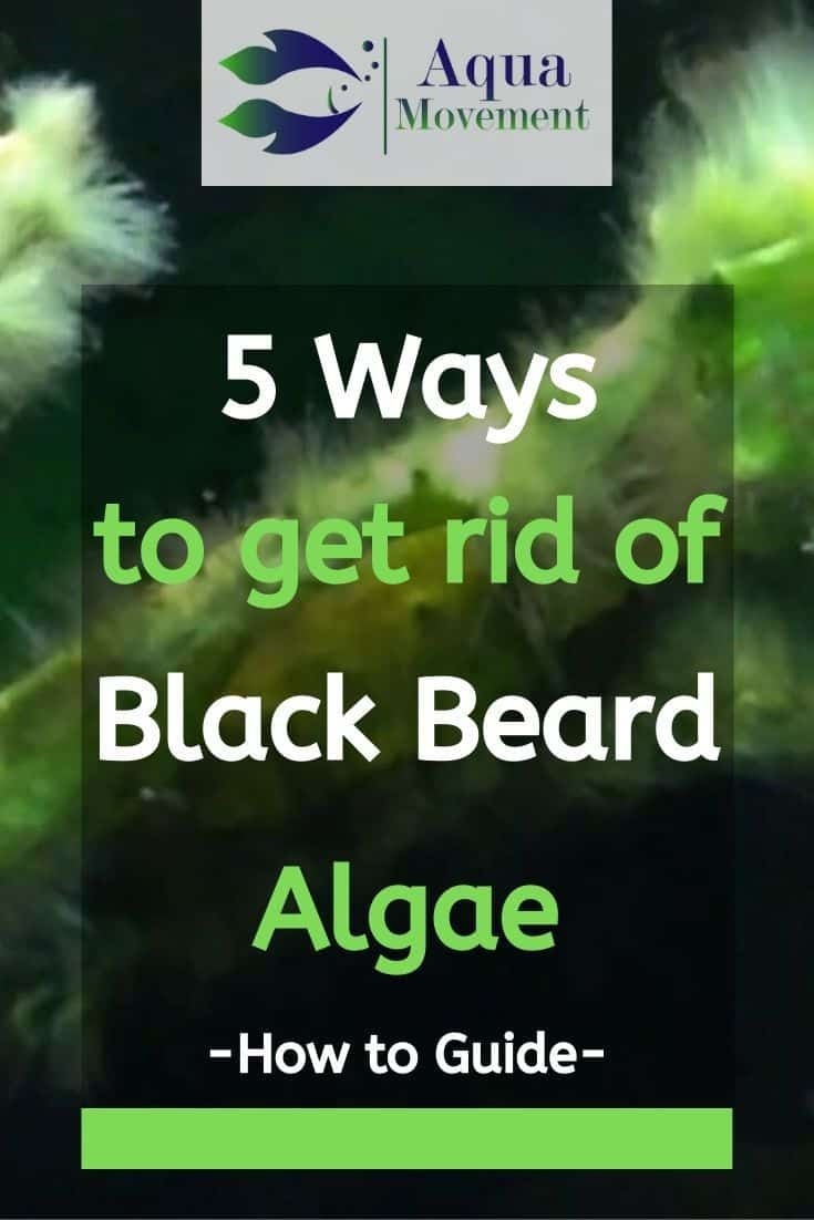 How To Get Rid Of Algae On Fish Tank Glass