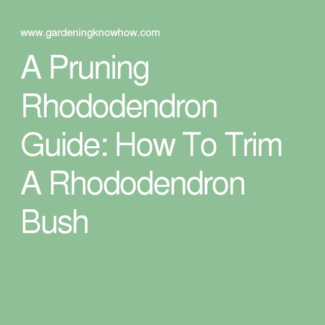 A Pruning Rhododendron Guide: How To Trim A Rhododendron Bush