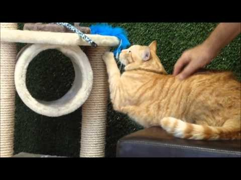Ranger - Available for Adoption at RSPCA QLD Wacol
