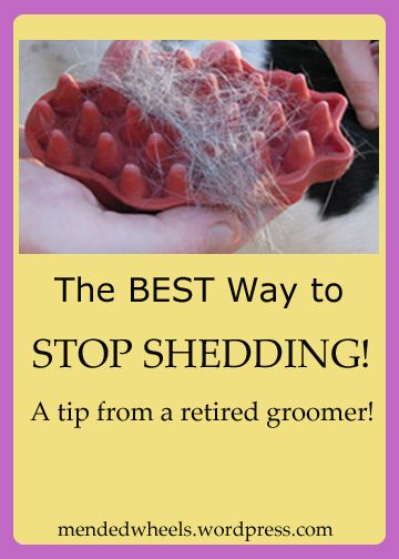 I used to be a dog groomer! This one simple tool will help stop shedding in your house. It's so easy even the kids can safely help! It's the most AMAZING product I've ever used!