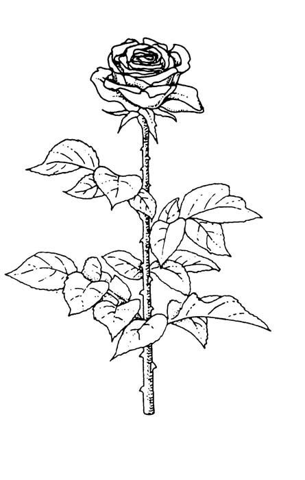 rose art coloring pages - photo#43