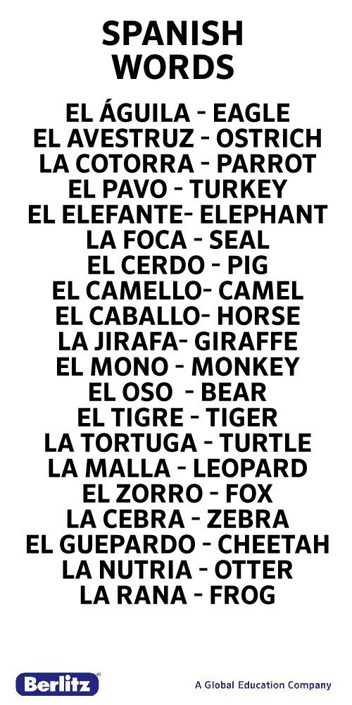 Spanish words for animals....I did not know many of these, and they are WEIRD! ~Jordan