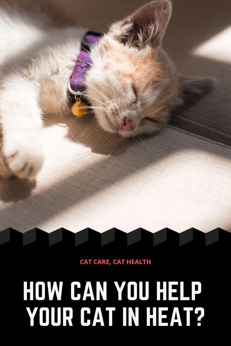 Help Your Cat In Heat Cat In Heat Cat Care Cats