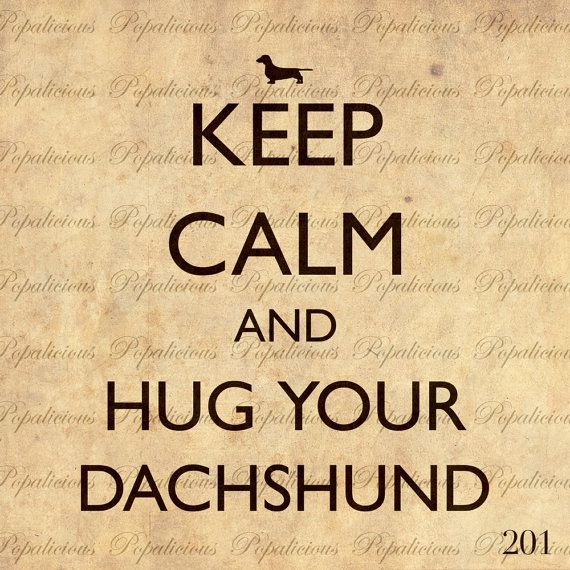 have you hugged your dachshund today? (the answer is YES I have.)