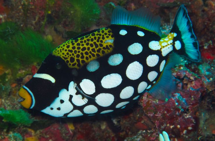 Wow! So many #designs in this #fish. Anyone know what kind he is?