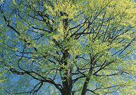 OBI+gibt+nützliche+Tipps+zum+Thema+Bäume+schneiden.+Erfahren+Sie+in+diesem+Berater,+welche+Bäume+und+Sträucher+Sie+wann+schneiden+und+wie+Sie+sie+Krankheitsbefall+schützen