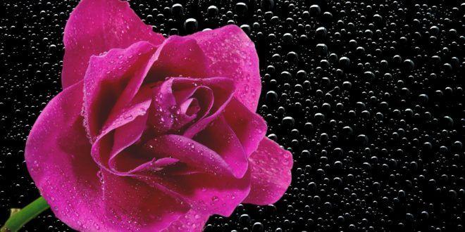 اجمل خلفيات لابتوب Hp Hd Laptop Wallpapers 1080p أكبر البوم صور لخلفيات لابتوب والأيباد أكث Rose Wallpaper Iphone Photography Apps Rose