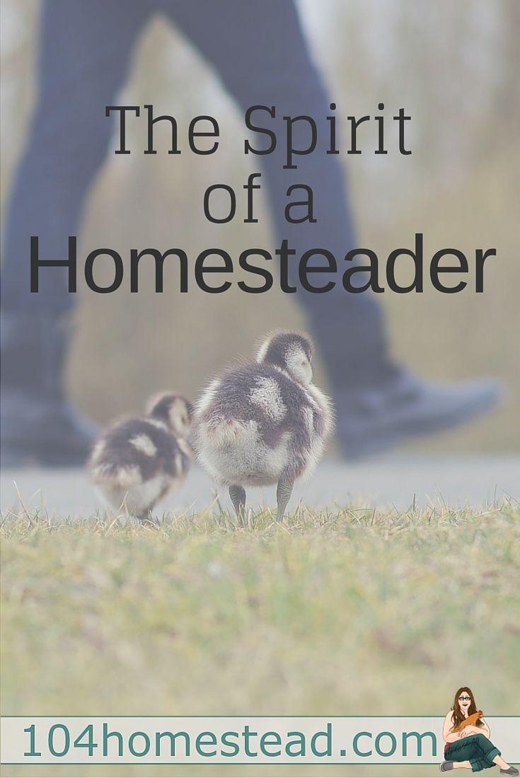 best 25 modern homesteading ideas on pinterest self sufficient