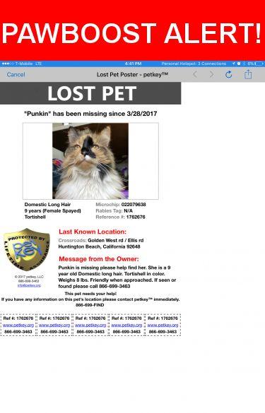 Please spread the word! Punkin was last seen in Huntington Beach, CA 92648.    Nearest Address: disc golf pkg lot n golden west in huntington beach across from library