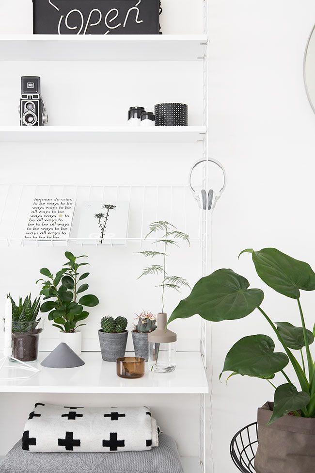 WORKSPACE | Plants