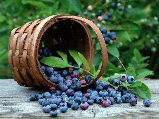 10 продуктов, которые улучшат вашу память и внимание  1. Черника Черника – одна из самых полезных ягод. Высокое содержание галловой кислоты в ягодах черники означает, что они защищают клетки головного мозга от негативных последствий стрессов.  2. Авокадо Не пугайтесь авокадо из-за высокого содержания жиров. Эти плоды содержат мононасыщенные жиры, которые являются полезными для здоровья. Высокое содержание витаминов С, К и В, а также фолиевой кислоты повышаю концентрацию.  3. Жирная рыба…