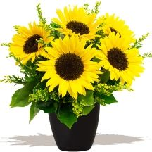 Happiness Sunflowers #flowers