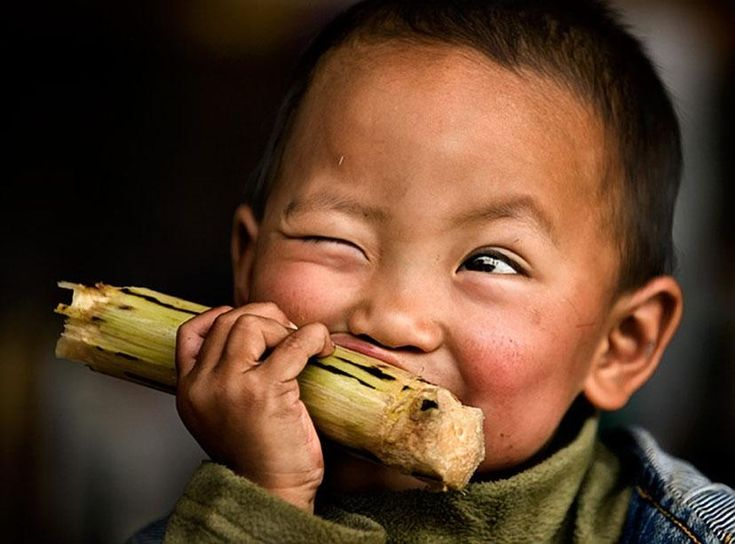 eating a bamboo shoot. or maybe sugar cane.  either way you gotta love the facial expression!