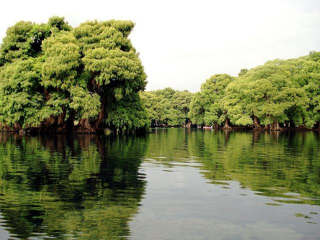 Lago de Camécuaro by LaLuz4/20, via Flickr
