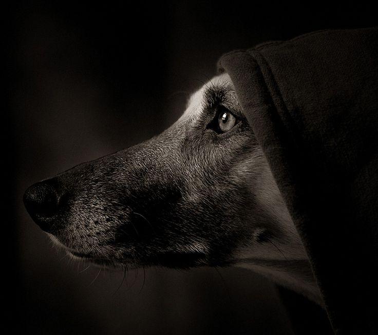 animale immagine - immagini muso, sfondi cane, ombra vettore, profilo sfondi, materiale occhio sfondo 1080x960 animale sfondo