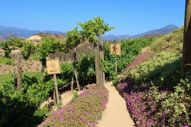 Small hiking trail - Indomita Winery - Casablanca Valey - Chile
