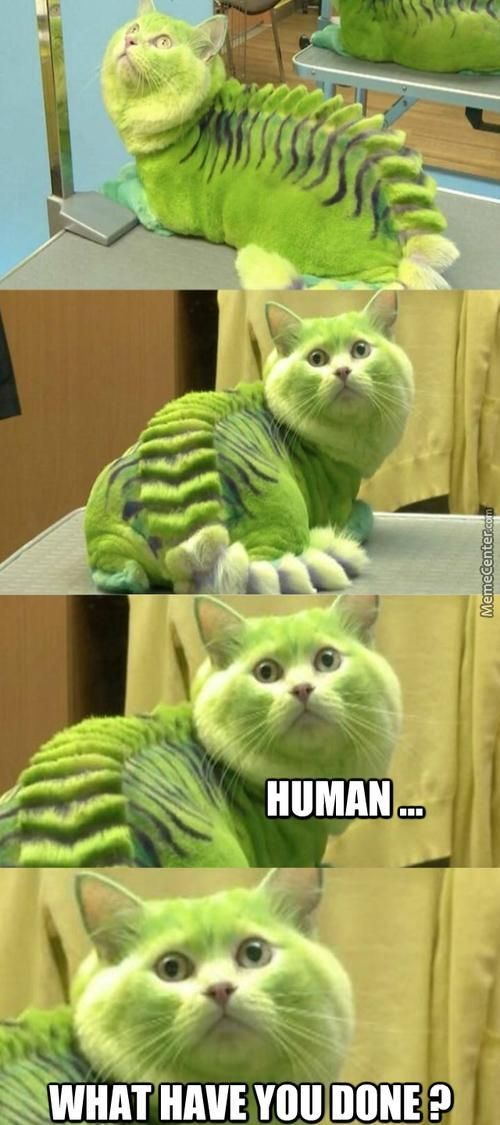 It's a Cat-erpillar! Or an Iguana. I'm not quite sure. Either way, THAT POOR THING!!: