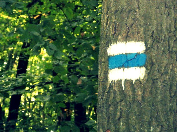 Katarínka - modrá - po modrej - les - za pokojom a dobrom, ideme na Katarínku - leto 2013 :)