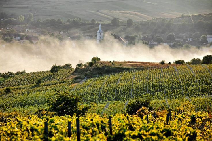 #Vineyard #Wine #Romania #Transylvania