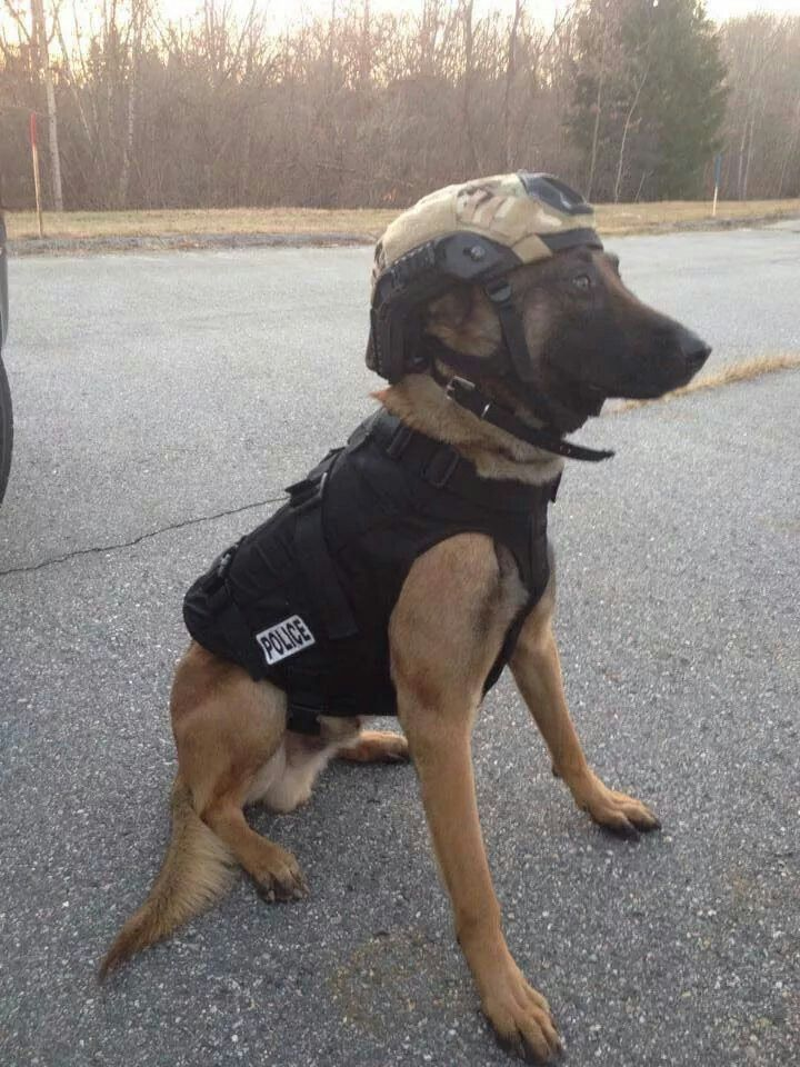 K9 Police Dog ...... Wiffff ..... Don't bug me when I'm workin', I'm workin', I'm workin'