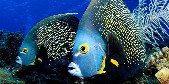 Ένα ζευγάρι... Ντόρι πιθανότατα καβγαδίζει μπροστά στον φακό - Φωτογραφική μαγεία από τους βυθούς των ωκεανών