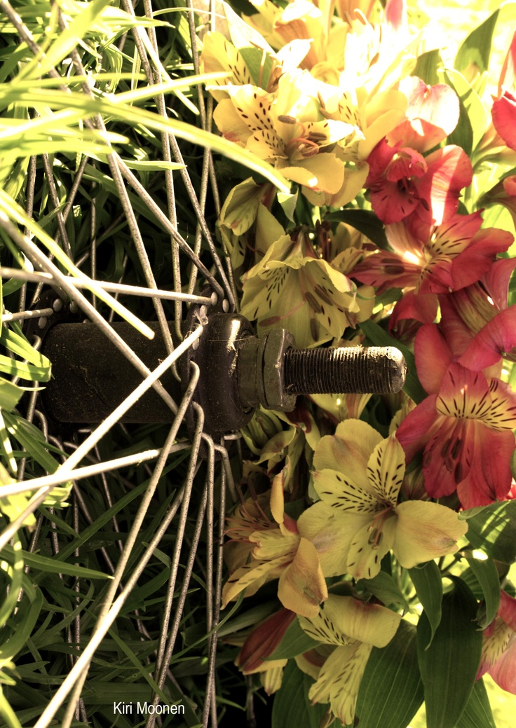 A wheel and a flower #Juxtaposition