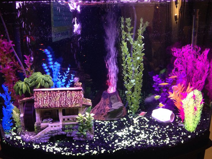 My new glo fish aquarium