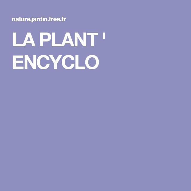120 best jardin : plantes & idées images on pinterest | plants