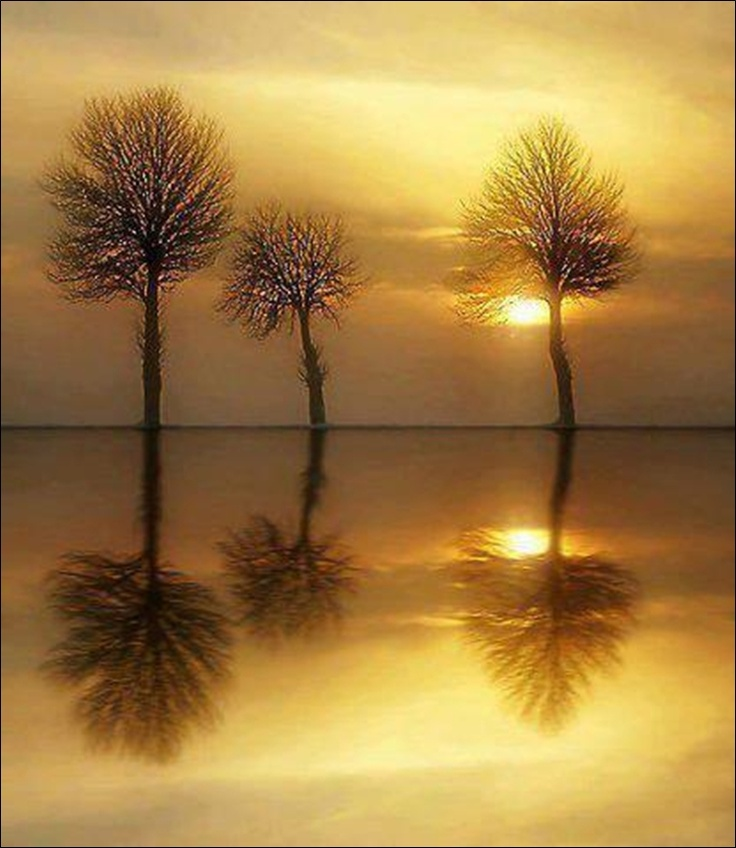 REFLETS DU SOIR..... by KAMATOUNIA.deviantart.com on @deviantART: Mirrors Image, Airbrush Art, Beautiful, Art Prints, Trees, Reflections, Sunrises Sunsets, Golden Hour, Caramel Apples