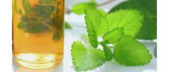 Receita de extrato de hortelã para gripe e resfriado