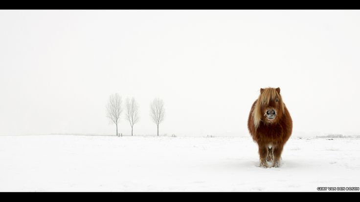 The Cold Pony by Gert van den Bosch, Netherlands, Winner, Open Nature & Wildlife, 2014 Sony World Photography Awards