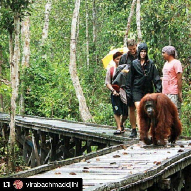 @virabachmaddjihi  Ayo pergi berwisata ke Taman Nasional Tanjung Puting, Pangkalan Bun, Kalimantan Tengah, Kalimantan. Lihat satwa langka yang di Lindungi dan di budidayakan untuk dilestarikan keberadaannya. Dengan Destinasi dan pesona yang sangat Indah. Dan pemandangan alam masih sejuk dan hijau. Kalimantan Tengah sendiri merupakan salah satu provinsi di pulau kalimantan dengan ibukotanya yaitu palangkaraya dan merupakan salah satu provinsi di Indonesia yang punya banyak tempat wisata dan…