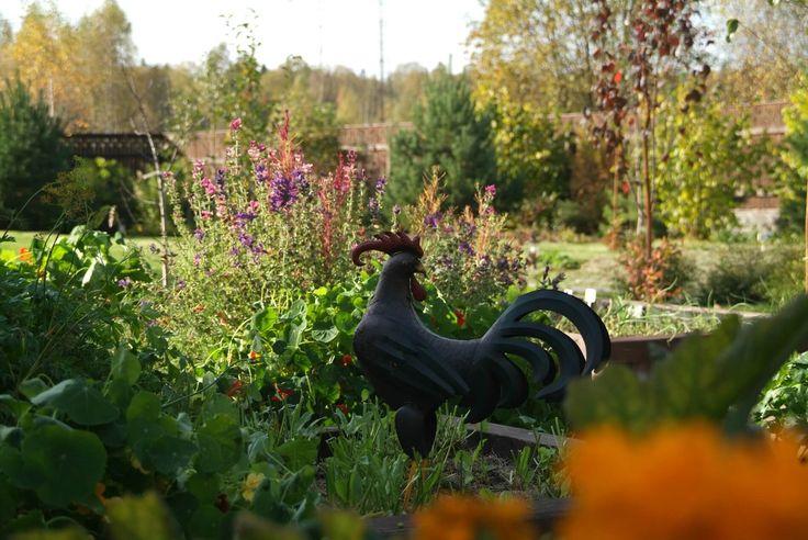 Фигура петуха на огороде