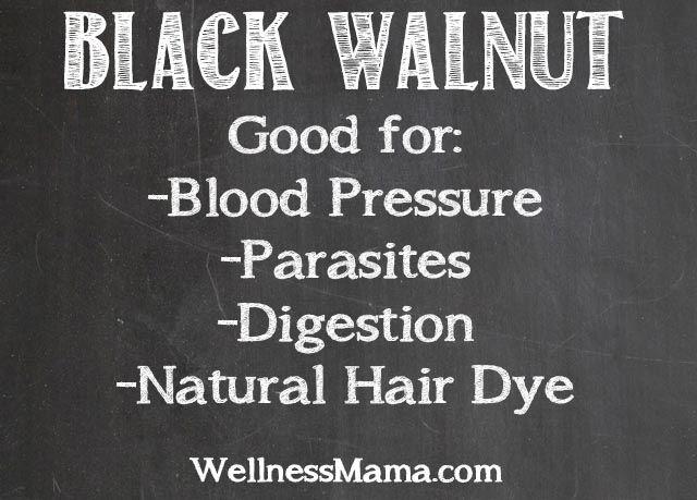 Black Walnut Hull Herb Profile from WellnessMama.com #naturalmedicine #wellness