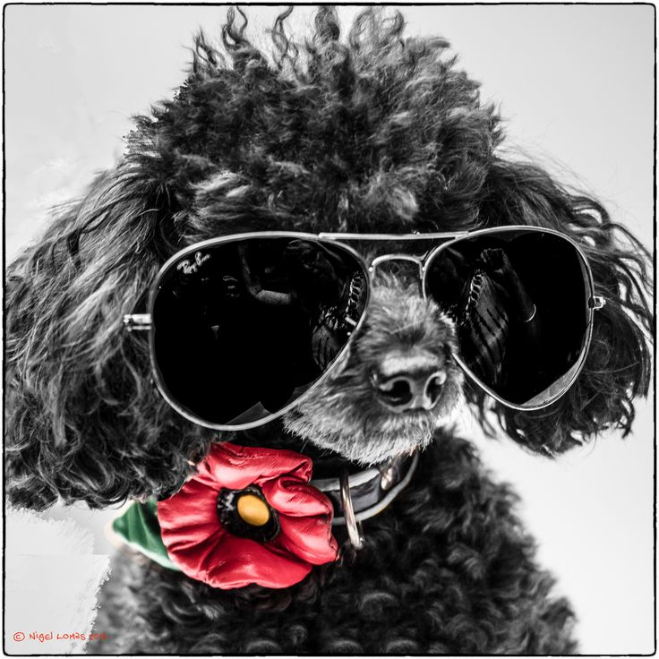 https://flic.kr/p/KxYMsW | Cool for dogs | OLYMPUS DIGITAL CAMERA