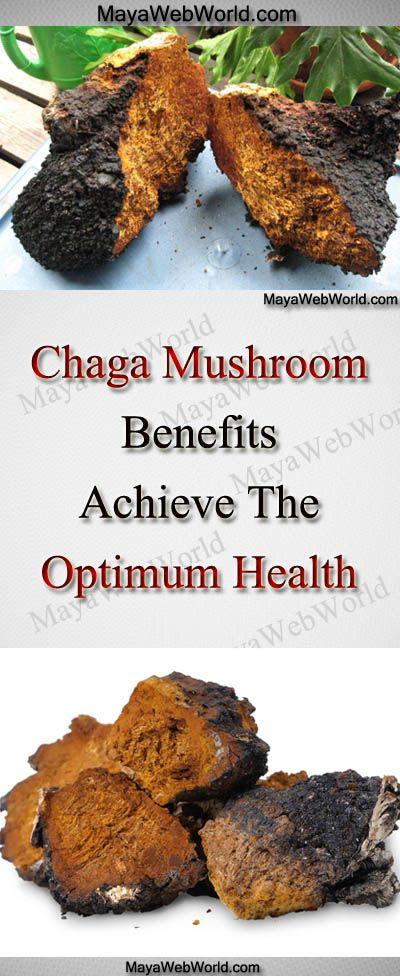 Chaga Mushroom Benefits – Achieve The Optimum Health