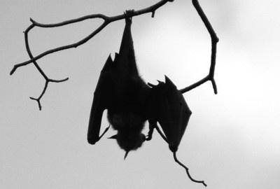 : Vampire, Silhouette, Tattoo Inspiration, Dark Things, Dark Art, Fruit Bats, Batti Bats, Photo, Favourit Animal