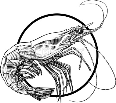 shrimp Royalty Free Stock Vector Art Illustration