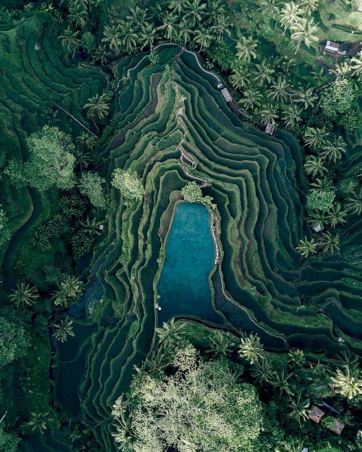 Check out this incredible drone shot of terraced farming in Bali, Indonesia. Terraced fields decrease both erosion and surface runoff, and are often used when growing crops that require irrigation, such as rice.  Photograph by Kendall Martin