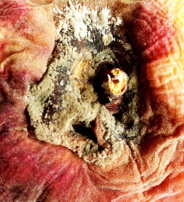 Mouldy peach close up