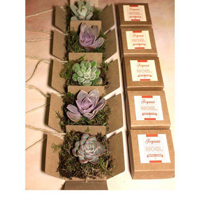 La Petite Boîte Succulente - Des mini plantes grasses en boîte pour un cadeau aux invités original et écologique !