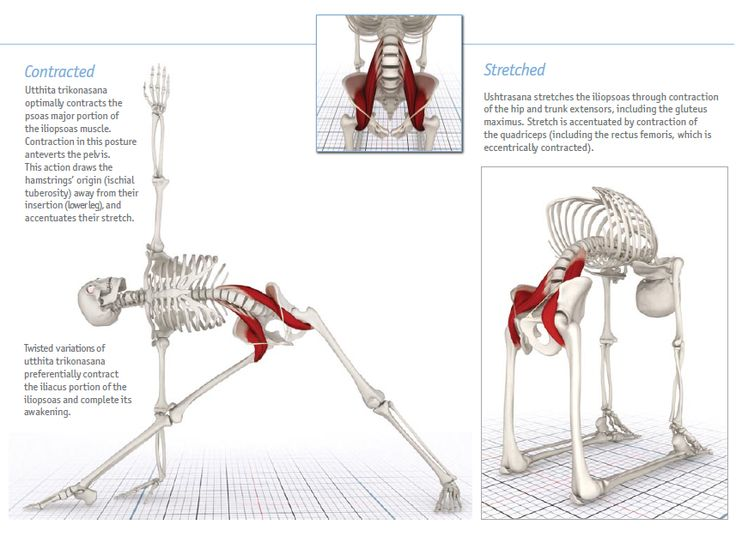 28 mejores imágenes en anatomia 3D HUESOS en Pinterest   Huesos ...