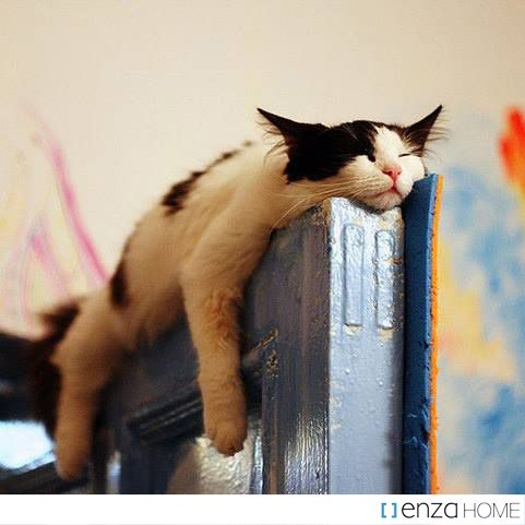 On #Fridays, do you #dream about how much #sleep you will get on the #weekend? We #do!