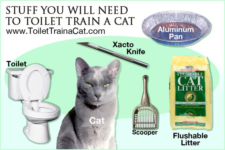 How Do You Litter Box Train An Older Cat