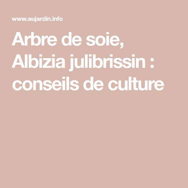 Arbre de soie, Albizia julibrissin : conseils de culture