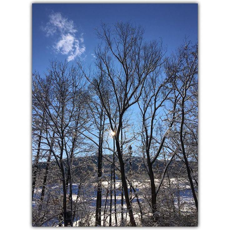winterwunderland #wien #vienna #österreich #austria #igers #igersvienna #igersaustria #discoveraustria #igersoftheday #ig_vienna #picoftheday #instagood #photooftheday #instagram