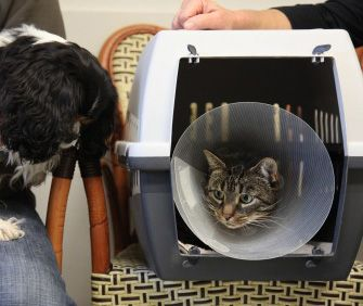 Low-stress ways to get your very fiesty (claws-out) cat to the vet | Vet Street  Cats significantly outnumber dogs in the U.S., yet felines are much less likely to see their vets on a regular basis because of cat carrier phobias. Vetstreet's Dr. Patty Khuly tells you how to make cat transport to the vet less stressful.